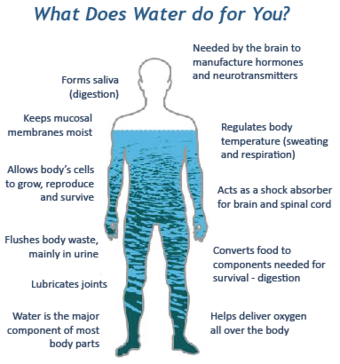 Water serves a number of essential functions to keep us all going
